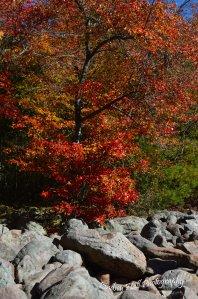 boulderfieldtree