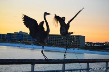 cranesfight3