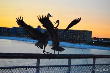 cranesfight4