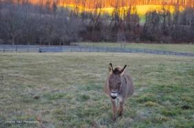 donkey1