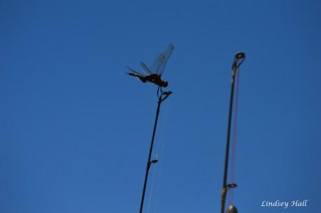 dragonflyfishingpole2