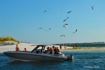 seagullsboat