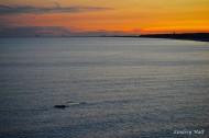 sunsetdolphin