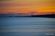 sunsetseagulls
